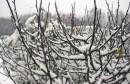 neige _au_kef