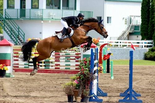 Salon du cheval et de l'équitation du 4 mai au 7 mai à Tunis City