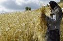 femme-rurale-tunisie-1