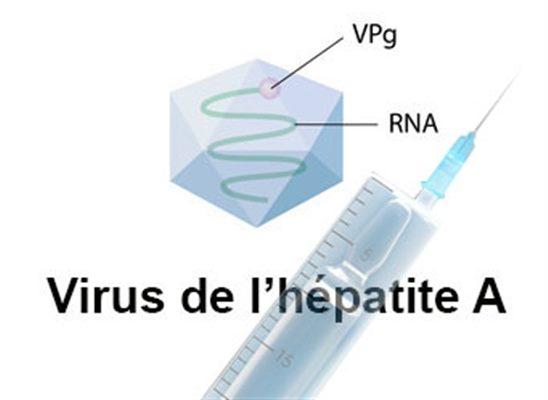 vaccination contre hépatite