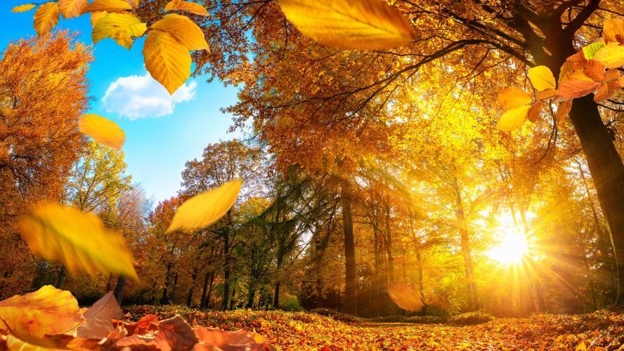 automne-baisse temperature