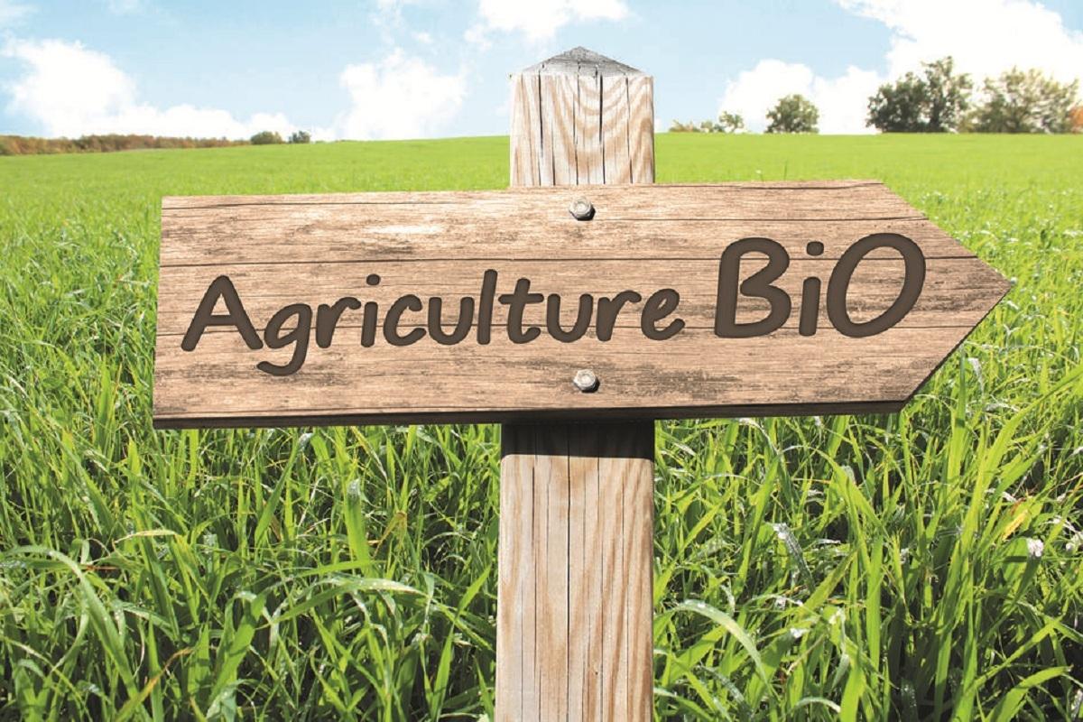 Agriculture Bio, panneau en bois dans paysage nature et campagne